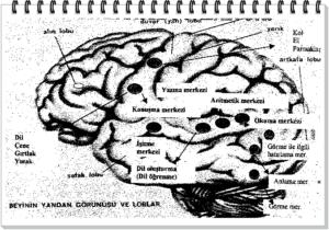 Beyin Okumayı Nasıl Öğreniyor?